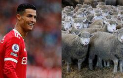 Криштиану Роналду сменил место жительства из-за овец
